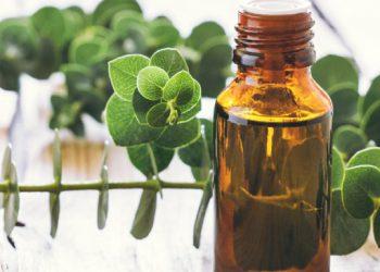 Vaping Eucalyptus Helps Cold and Flu